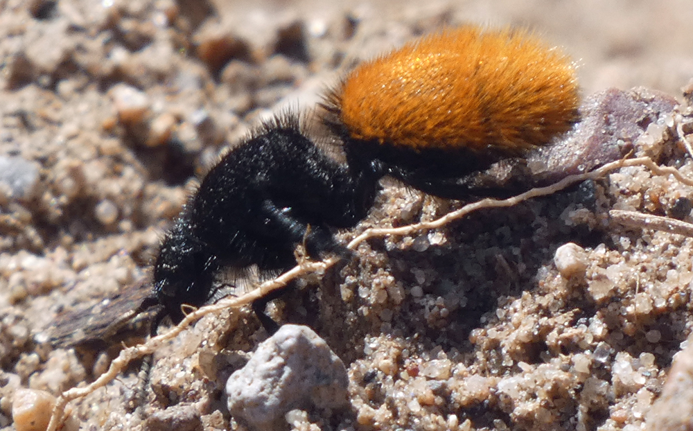 Female, Rio Grande Bosque, Albuquerque, August 2021