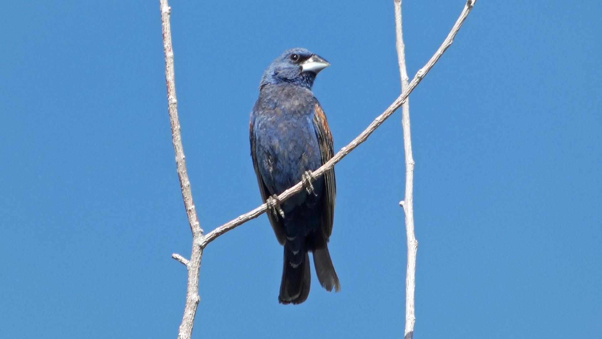 Male, Rio Grande Bosque, Albuquerque, August 2021