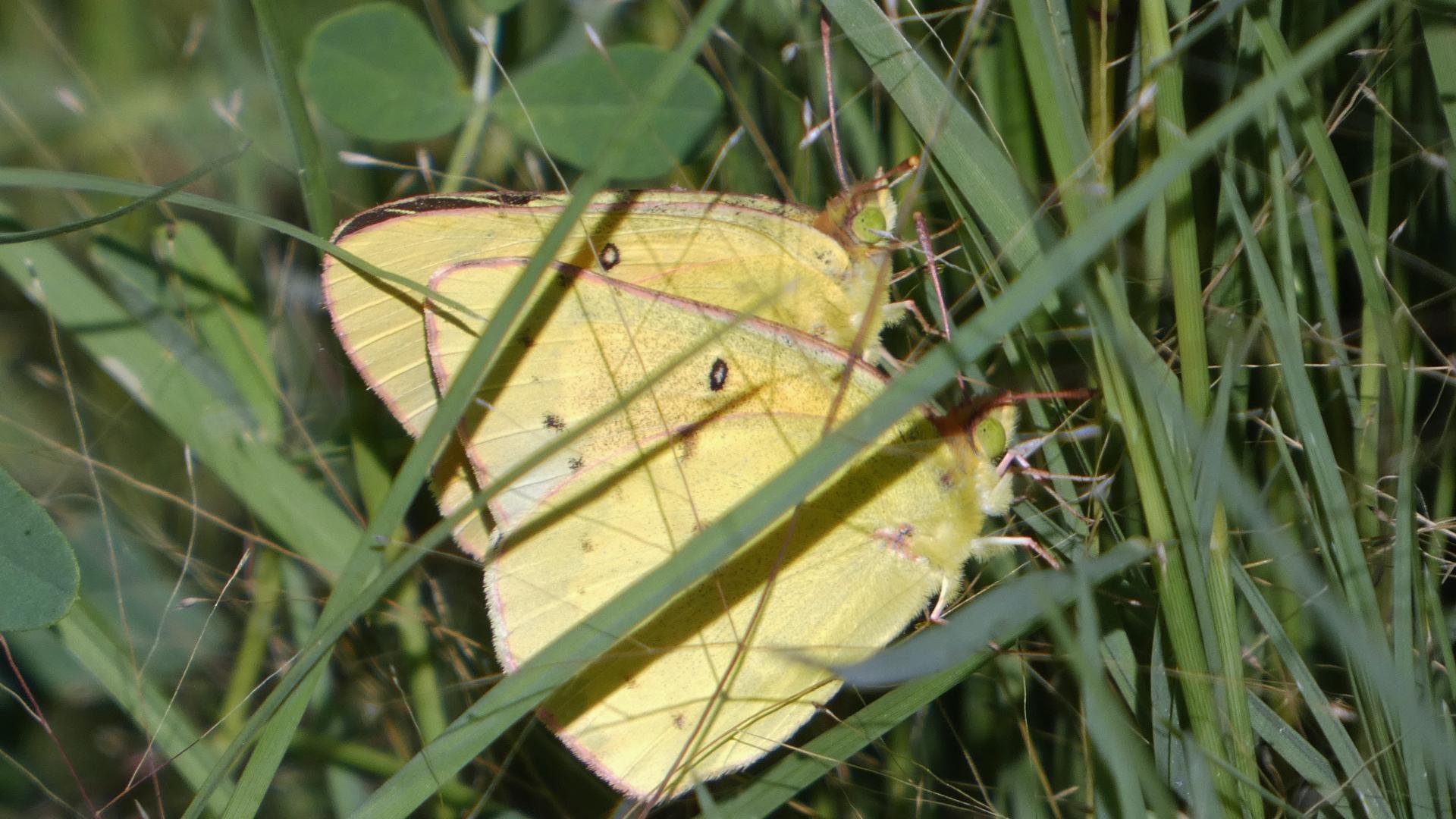 Mating, Rio Grande Bosque, Albuquerque, July 2020