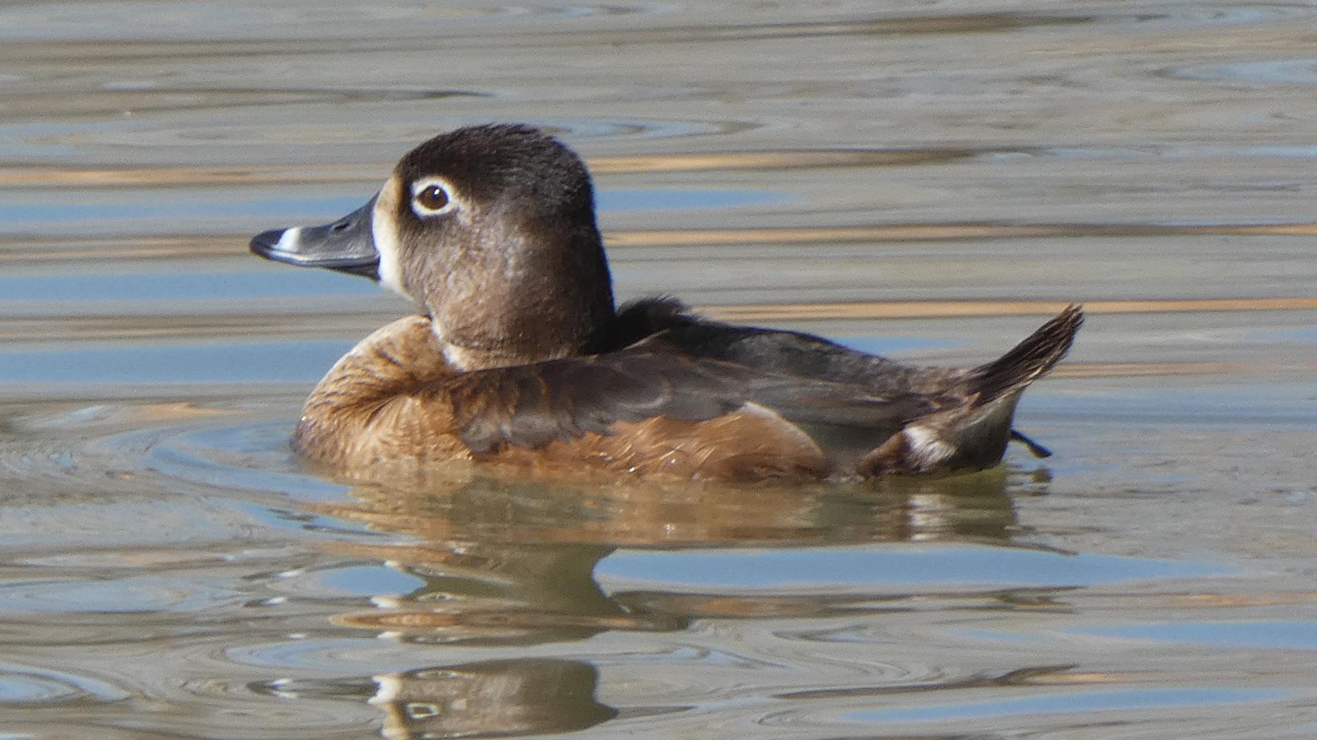Female, Rio Grande Bosque, Albuquerque, March 2021