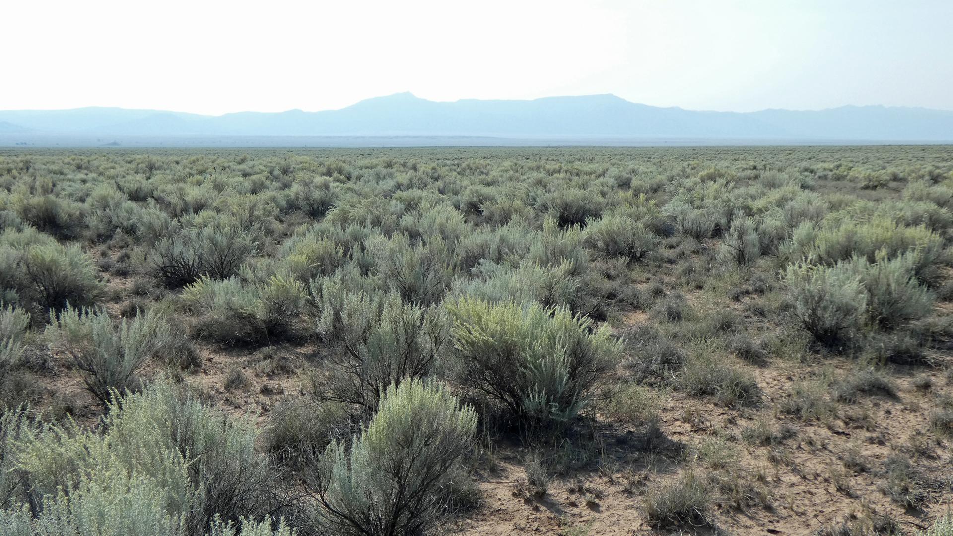 Mesa del Sol, Albuquerque, August 2020