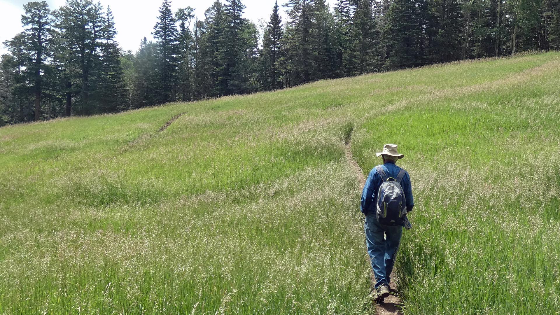 Upper Sandia Mountains, July 2021