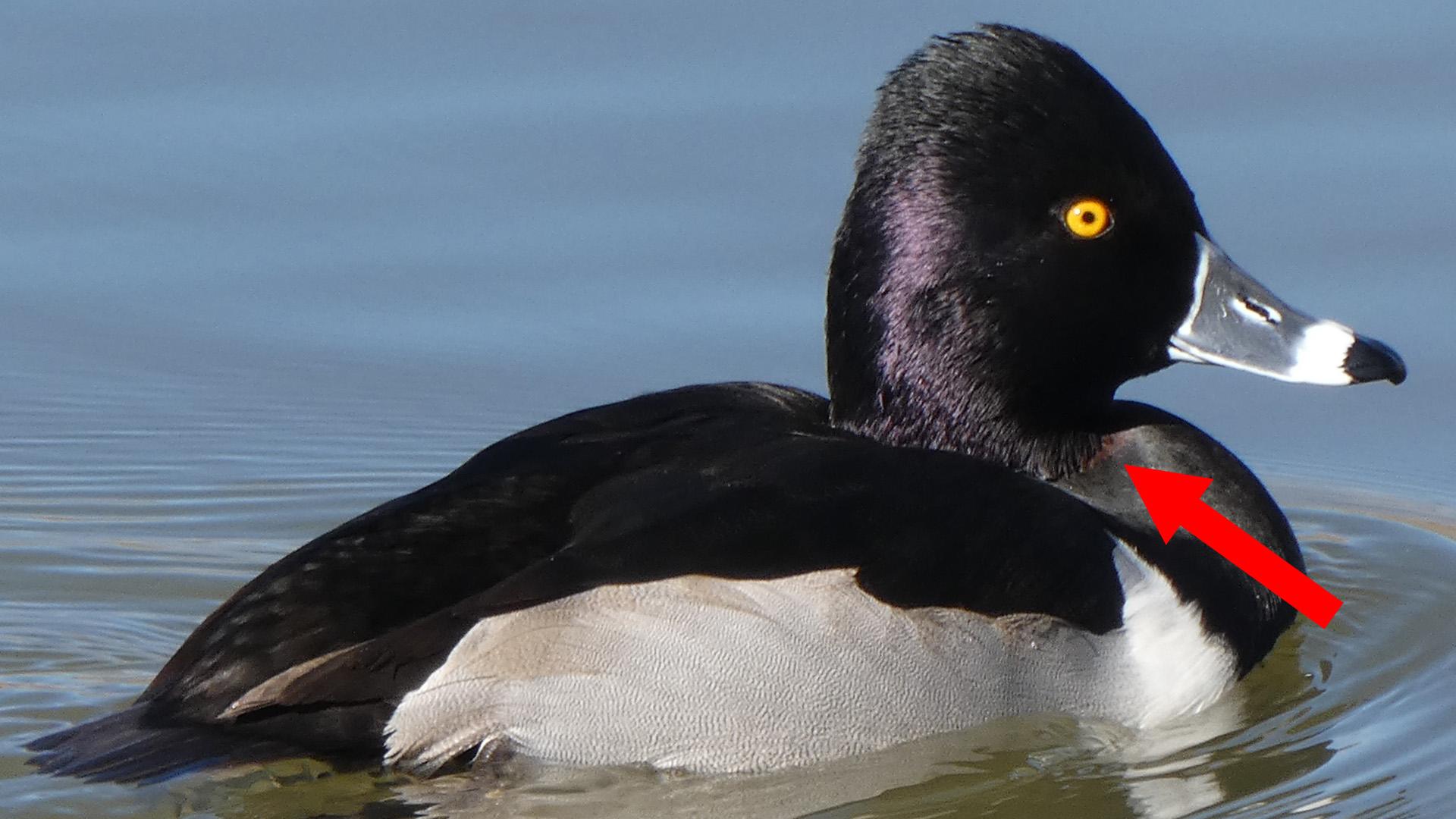 Male, Rio Grande Bosque, Albuquerque, January 2021