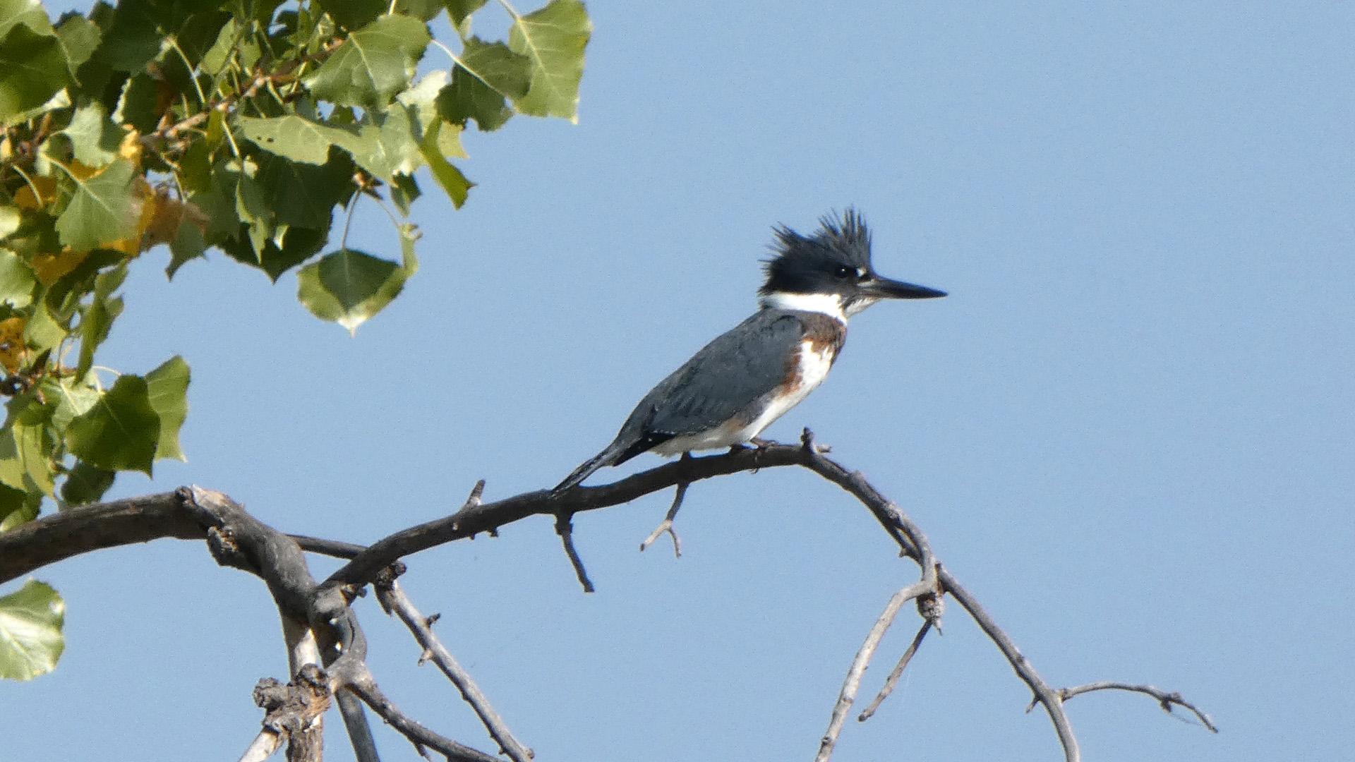 At pond, Rio Grande Bosque, Albuquerque, September 2020