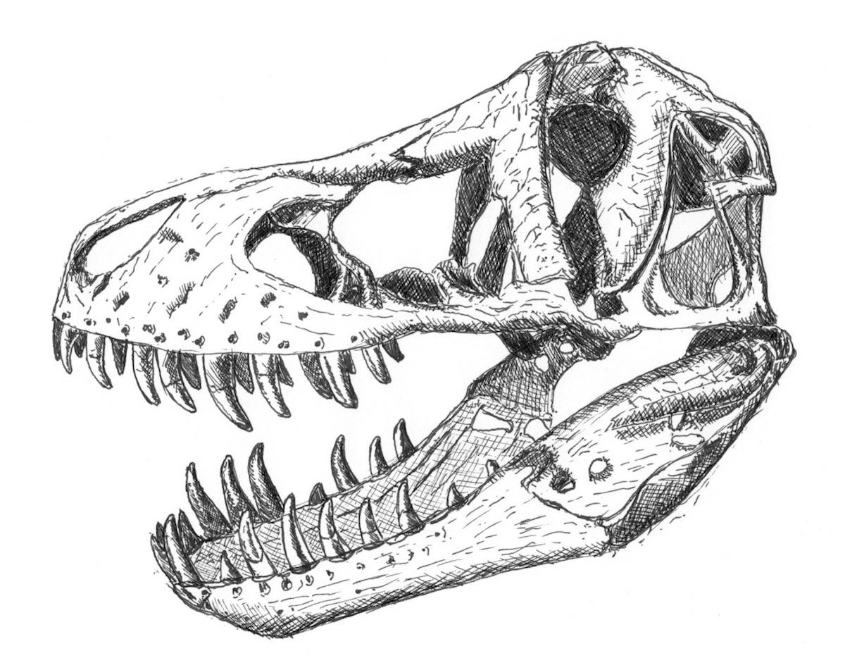 so war tyrannosaurus rex wirklich - atlant