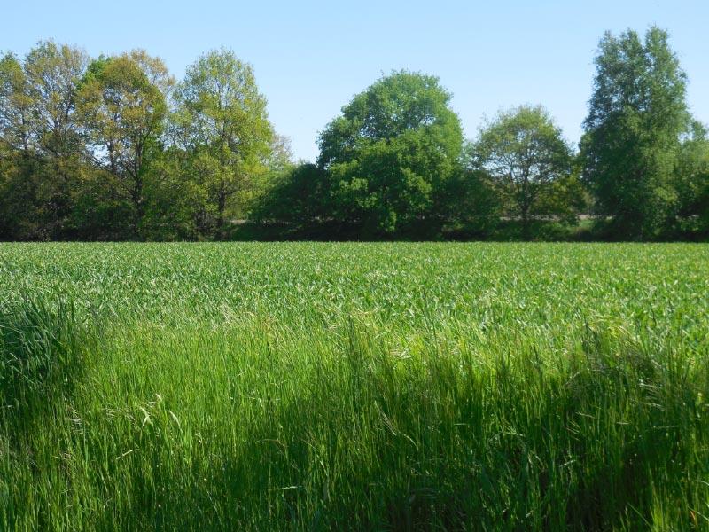 Wiesen, Felder, weite Landschaft