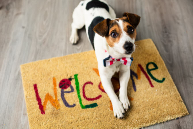 Dog boarding and dog grooming in Rutherfordton, NC