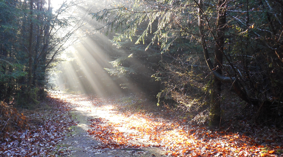Lumiere d'automne pres du Col du Lamperstein