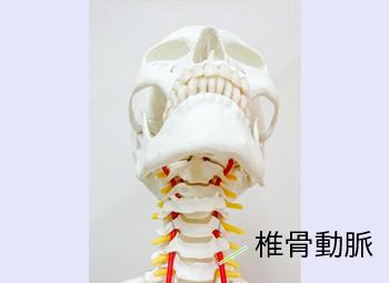 首こりの影響が椎骨動脈を圧迫する