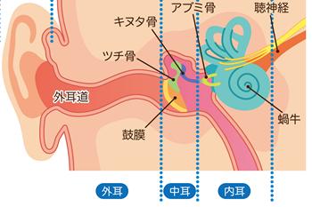 内耳細胞の血流を良くするツボ
