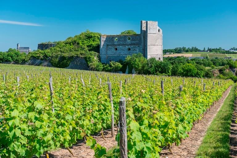 Carrière et élévateur de Pincourt dans les vignes de Montjean sur Loire, © Dominique Drouet