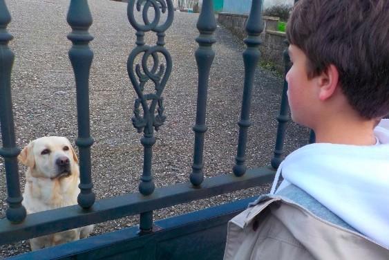 Fobia específica a animales. Perros. Terapia de Exposición - Psicólogo Daniel López - Santiago de Compostela