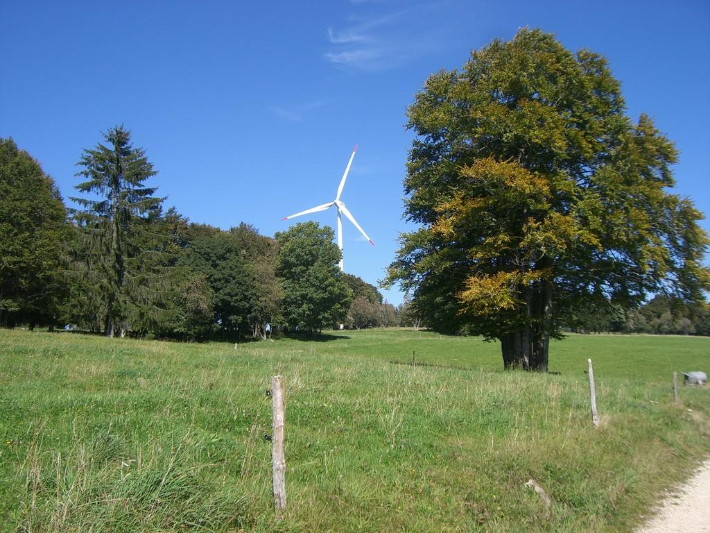 Windräder soweit mann sieht