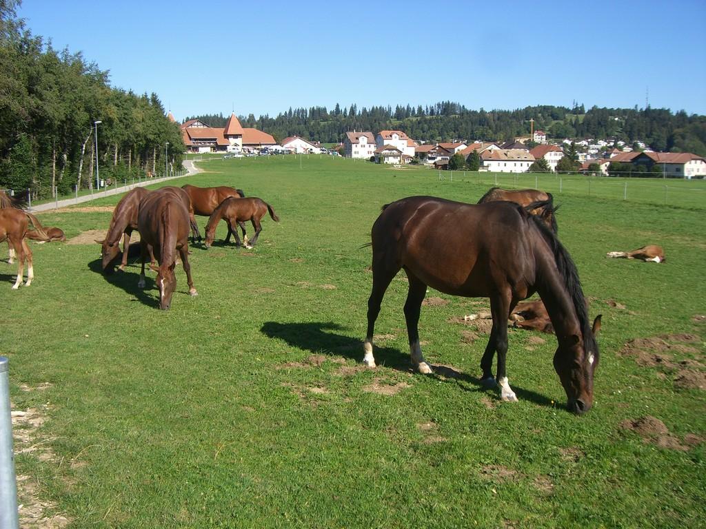 Pferde, Pferde, Pferde..