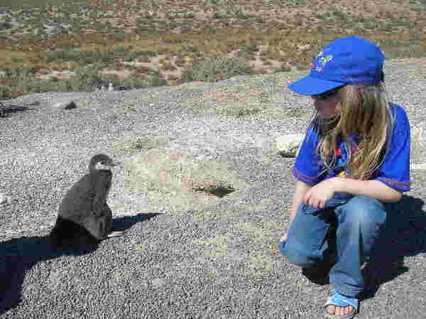 Magellan-Pinguin, Argentinien