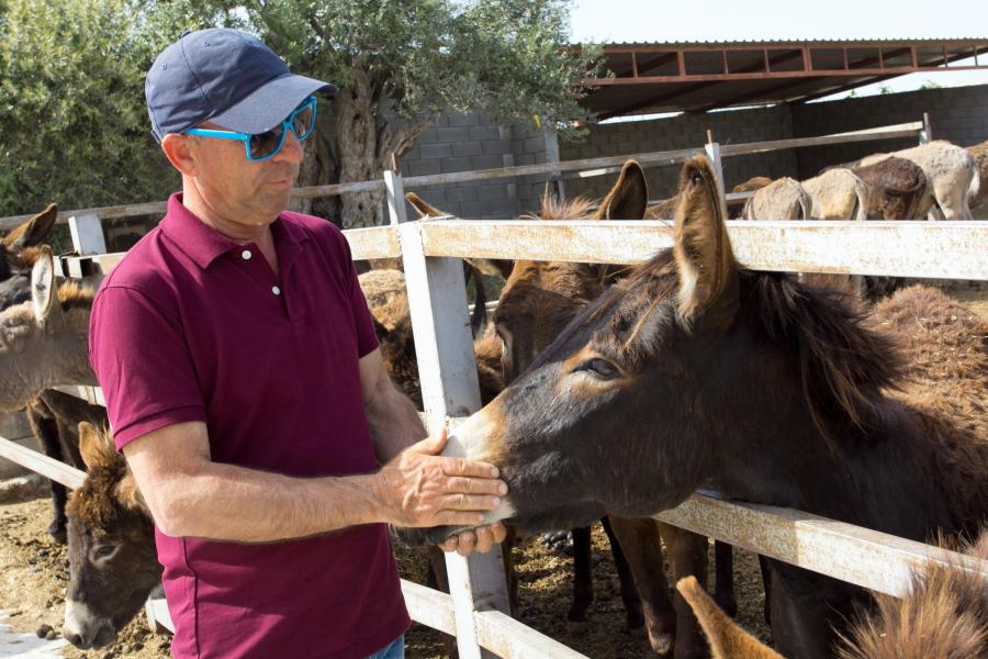 Pieris Georgiadis augina du šimtus asilų savo ūkyje Golden Donkeys Farm