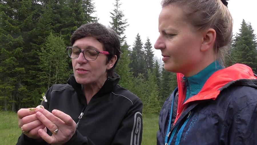 Christine Keck rodo naudinguosius augalus savo darže Kleinvalsertalyje prie svečių namų Alpengasthof Hornlepass