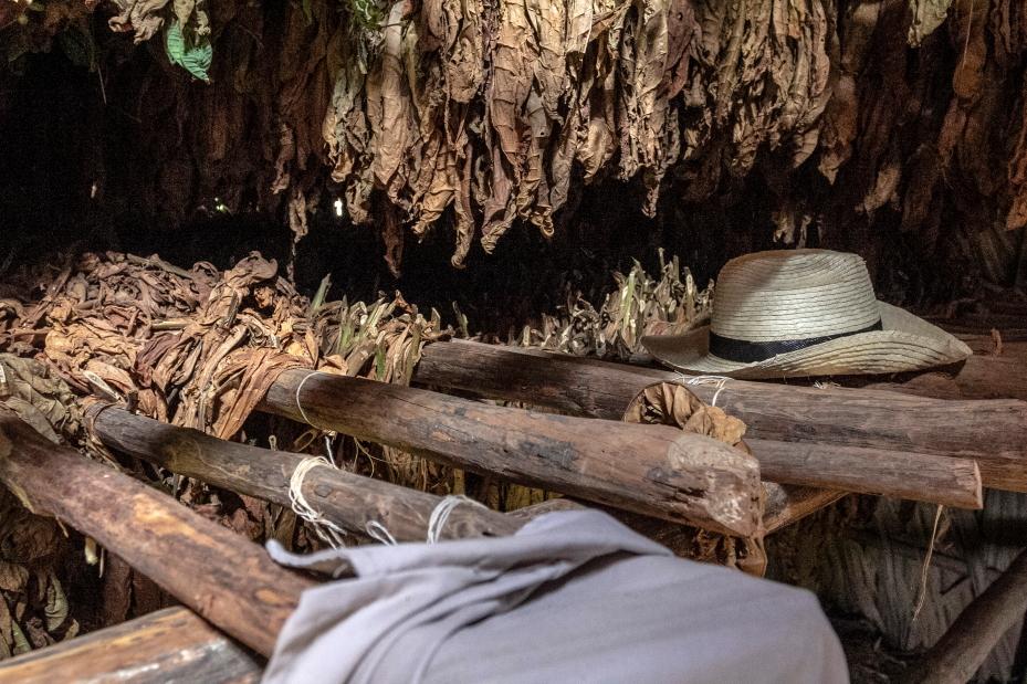 Tabako lapai miega tol, kol ugnelė juos pažadina
