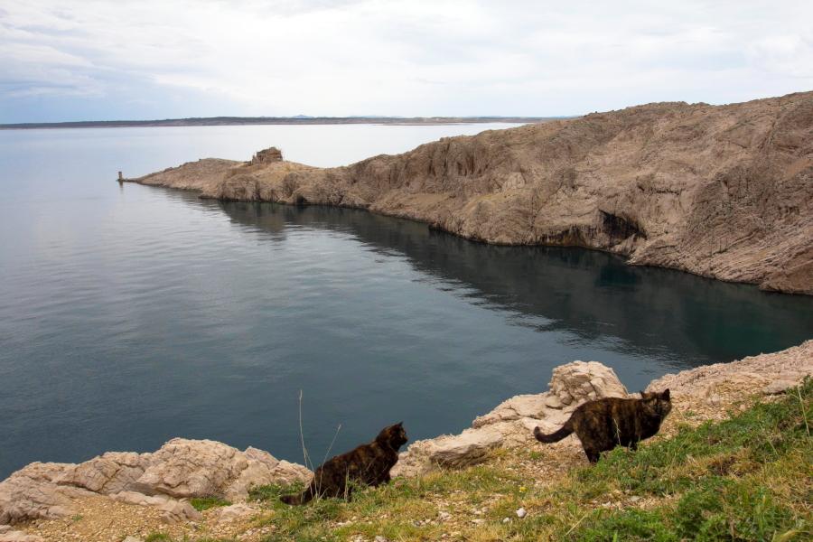 Katinai Pago saloje - Kroatija
