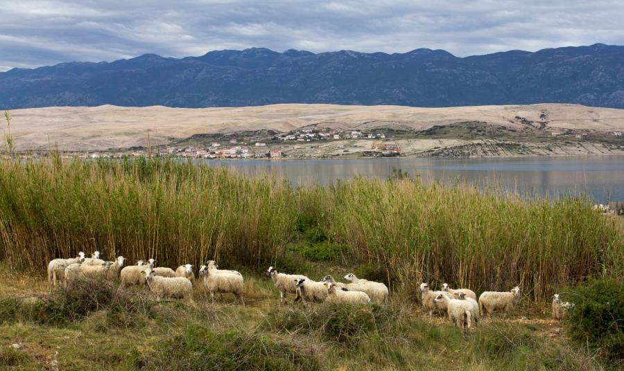 Pago salos avys kasdien gėrisi gamtos vaizdais - Kroatija