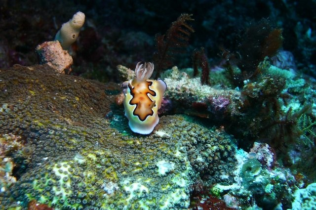 インドネシアの海は、ウミウシがたくさんいます。