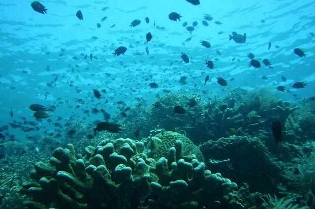 珊瑚がたくさんいますね。