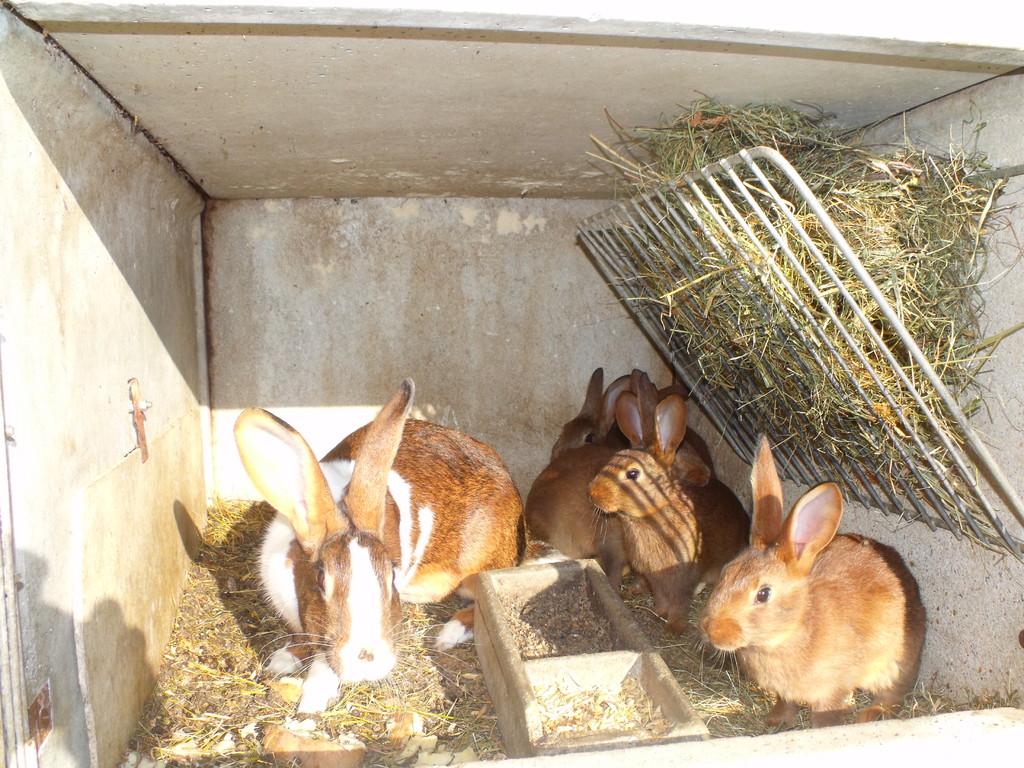 les lapins du Domaine du Châtelet