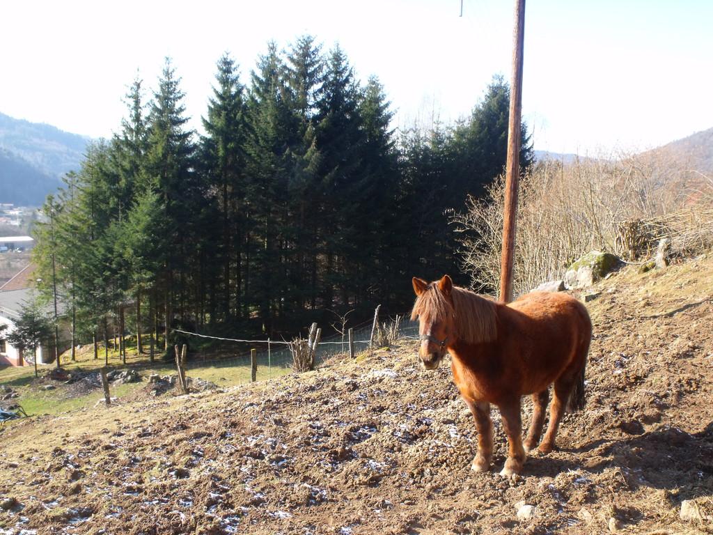 le cheval du Domaine du Châtelet