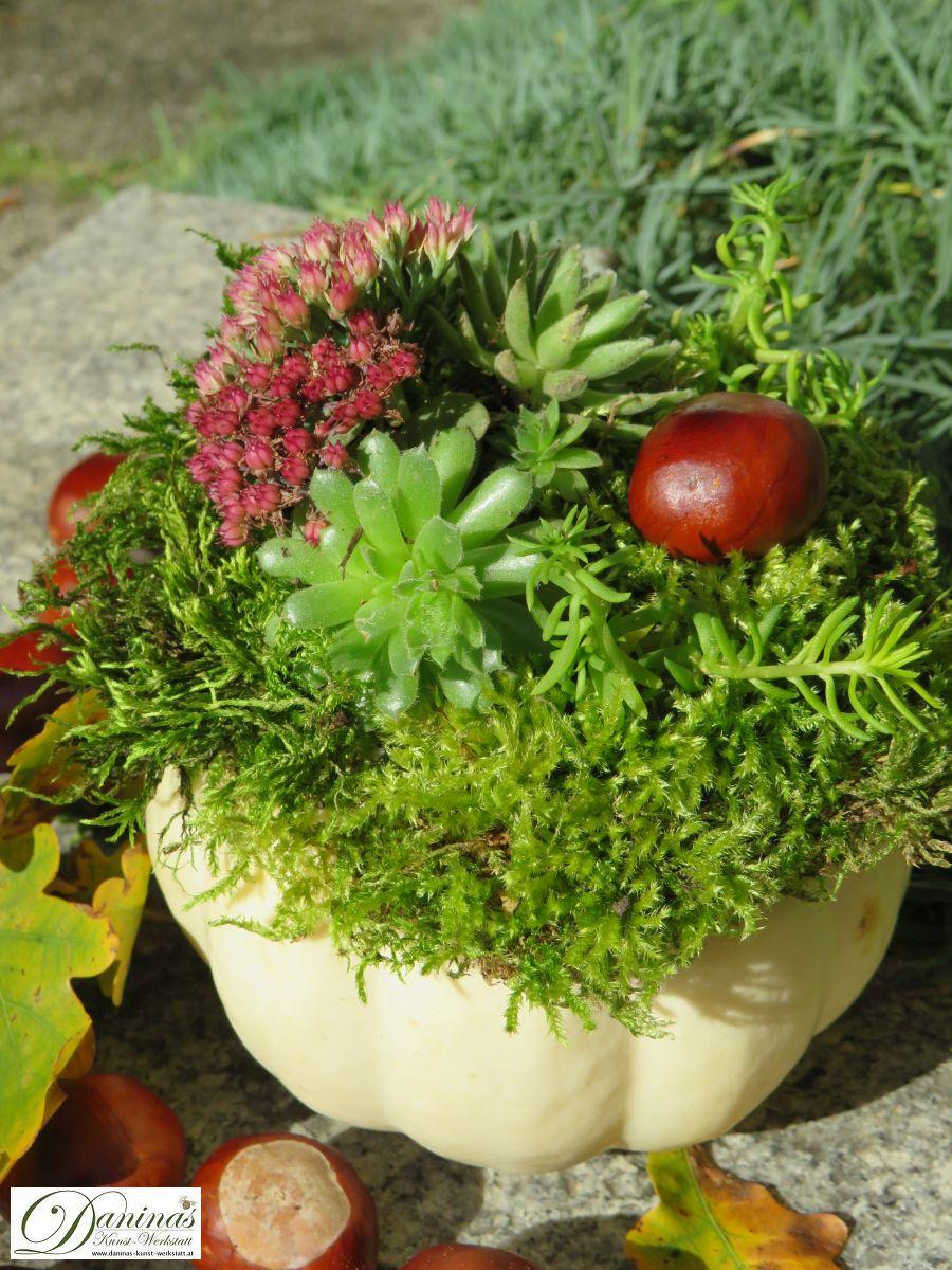 Herbstliche Kürbisdeko mit Moos, Hauswurz, Fetthenne, Mauerpfeffer und Kastanien
