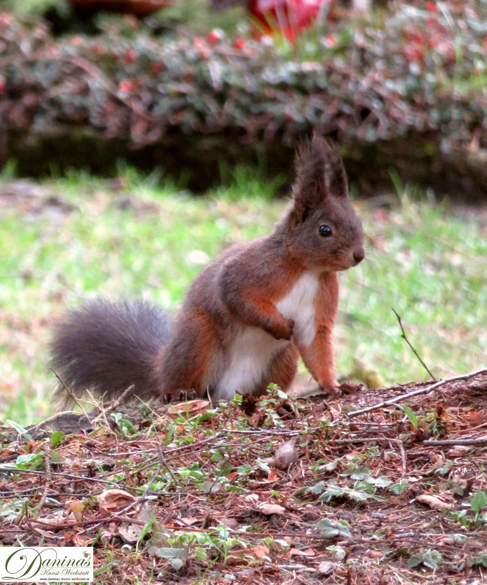 Entzückendes Eichhörnchen auf Nahrungssuche im herbstlichen Garten.