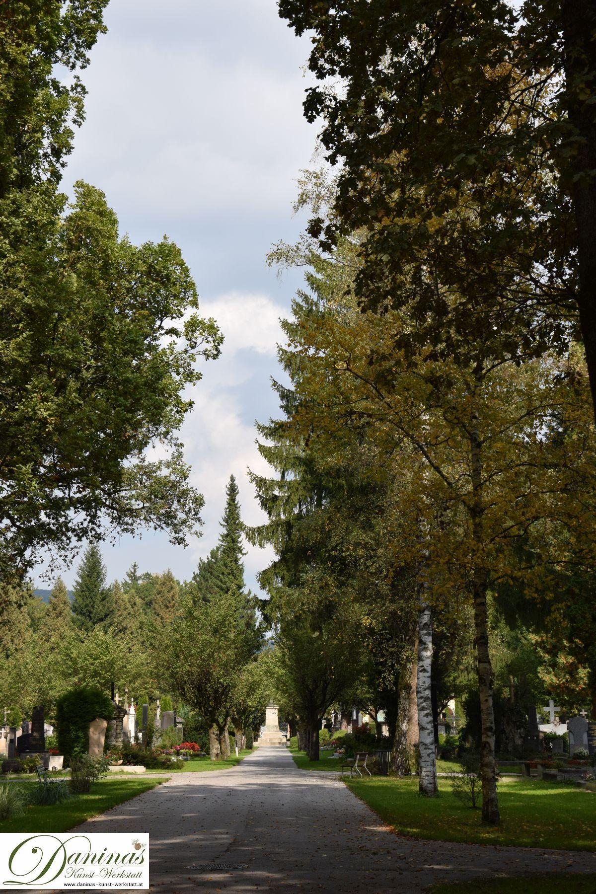 Hohe Allee von dunklen amerikanischen und orientalischen Lebensbäumen im Salzburger Kommunalfriedhof.