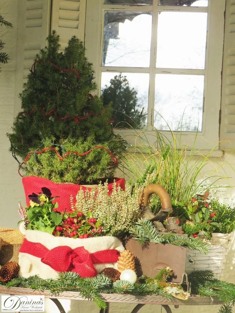 Weihnachtsdeko aussen selber machen: Pflanzen mit Jutte und Wolle verpacken