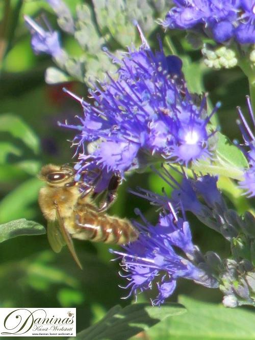 Fleißige Honigbiene auf Nahrungssuche.