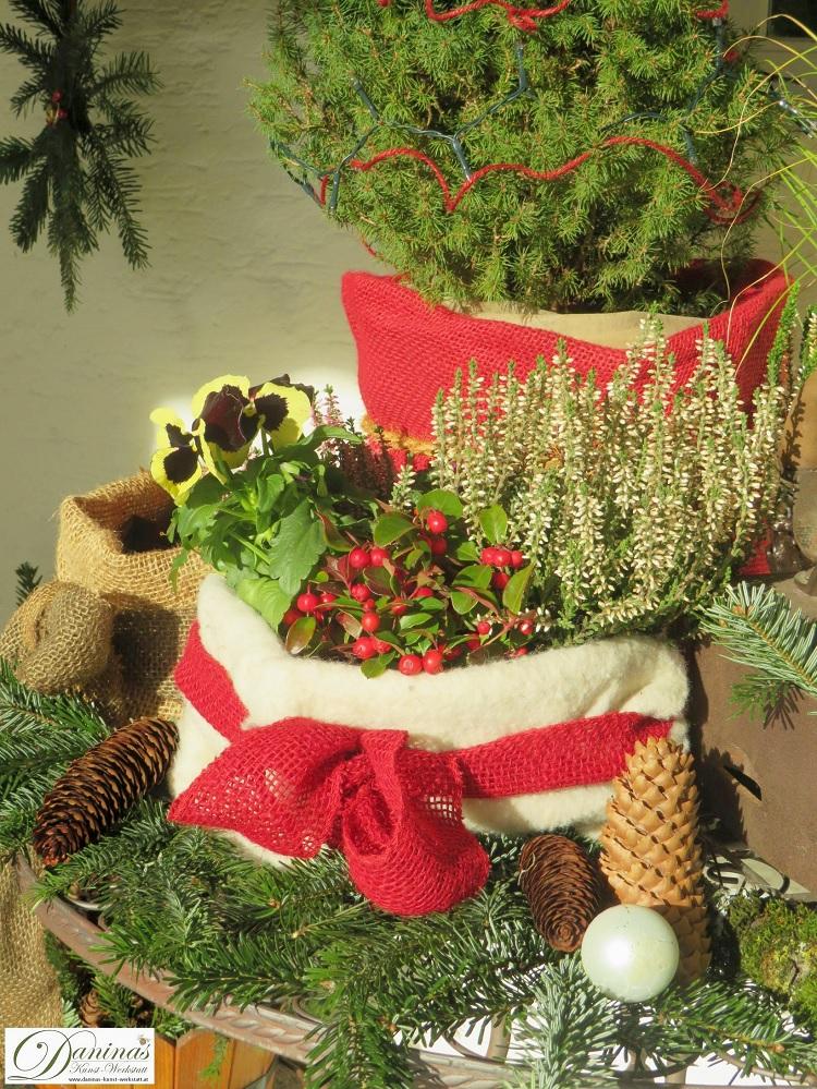 Weihnachtsdeko für die Terrasse und den Garten mit winterharten Blumen in Töpfen, Tannenzweigen und Zapfen