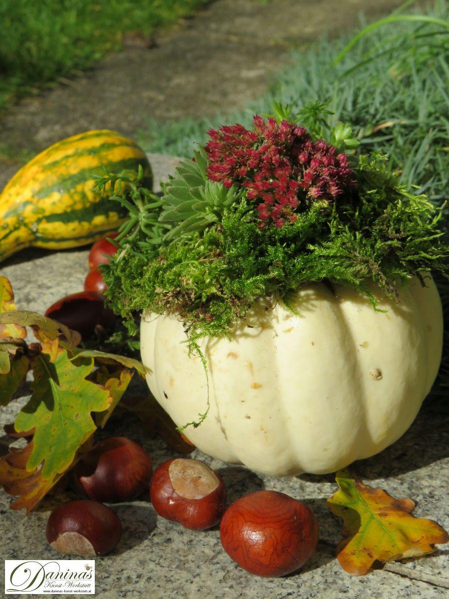 Herbstdeko für draussen mit Kürbissen, Moos, Hauswurz, Fetthennenblüten, Herbstblättern und Kastanien
