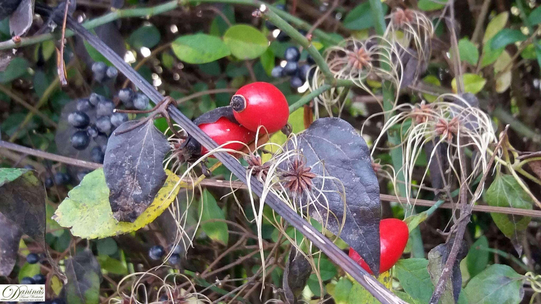 Herbst von seiner schönsten Seite: bunte Blätter, Samenstände & Hagebutten