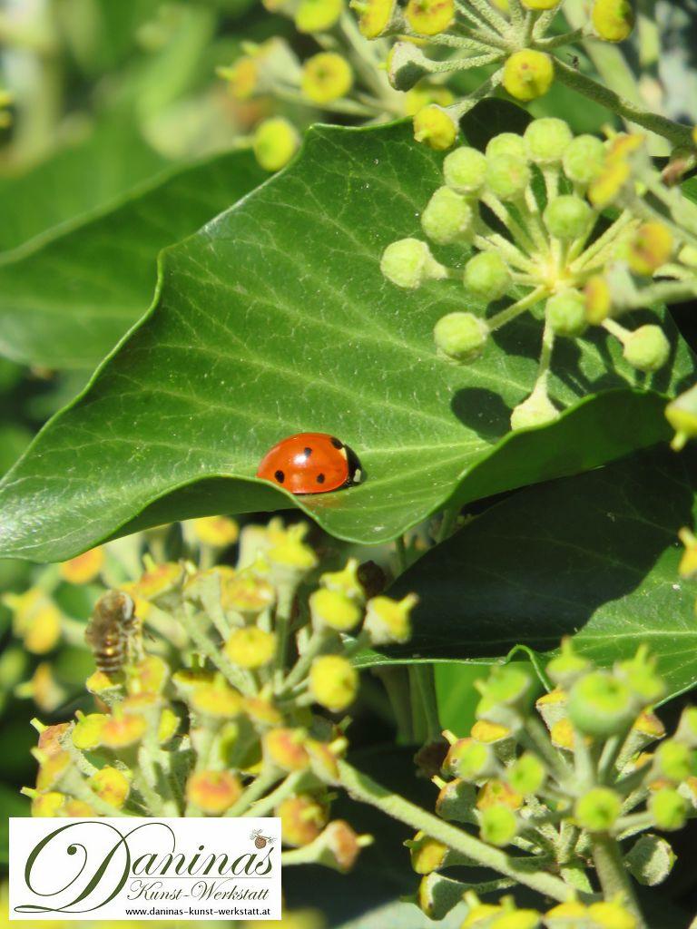 Nützliche Pflanzen wie Efeu gehört in den Naturgarten
