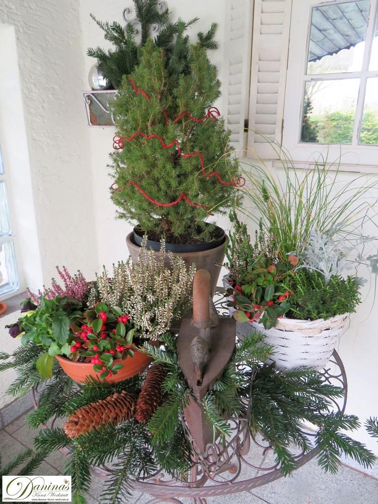 Winterdeko Idee für die Terrasse und den Garten mit Weihnachtsbäumchen und winterharten Pflanzen