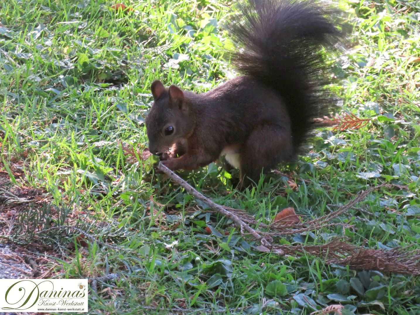 Eichhörnchen knappert kleinen Rasenpilz