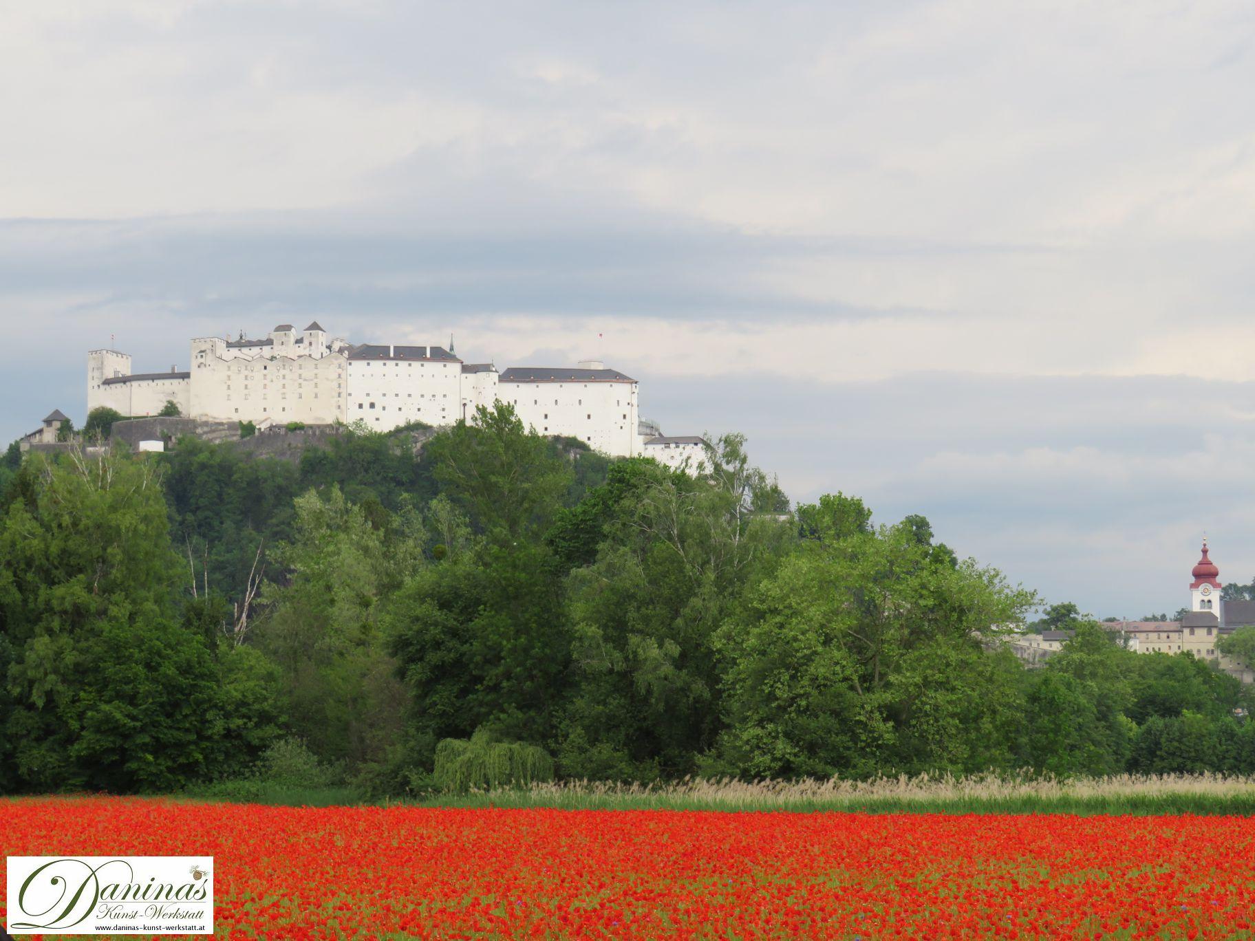 Salzburg Sehenswürdigkeiten hinter Mohnfeld - Festung Hohensalzburg & Stift Nonnberg