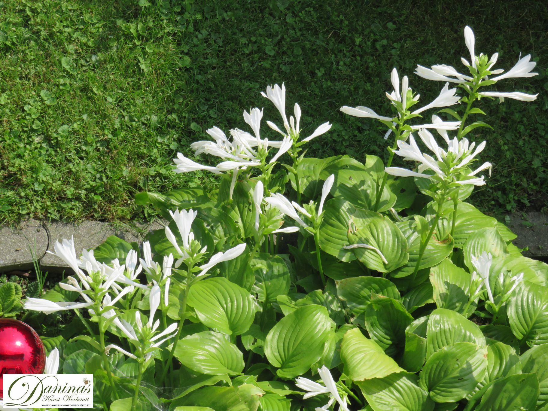 Gartengestaltung Idee: Weißblüher überall