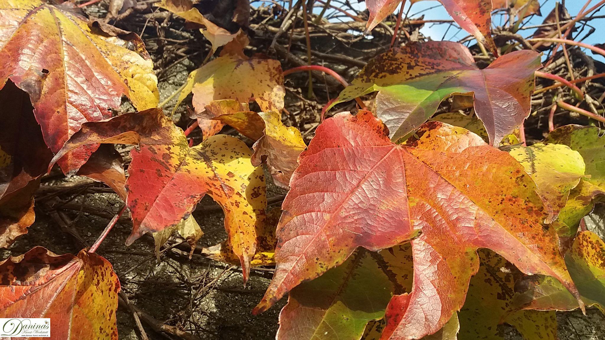 Herbst von seiner schönsten Seite: Warme Farben, bunte Blätter