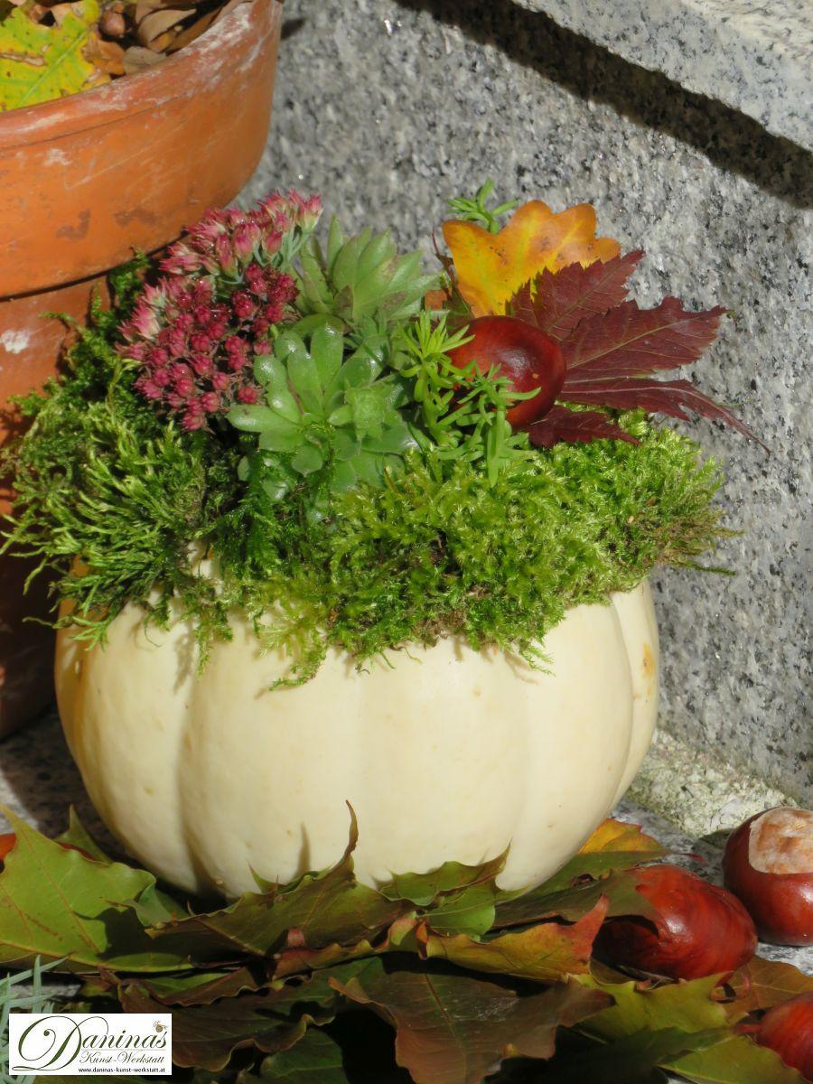 Herbstdeko Idee #1: Weißer Kürbis dekoriert mit Moos, Hauswurz, Fetthenne, Mauerpfeffer, bunten Blättern und Kastanien