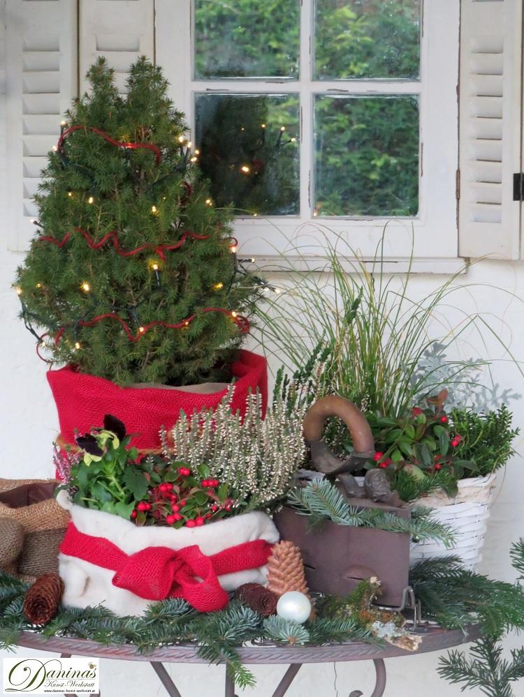 Weihnachtsdeko auf der Terrasse mit Christbäumchen und winterharten Pflanzen