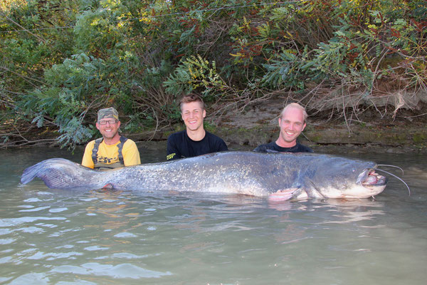 Der Wels von 258 cm ist bisher der größte Wels, den wir je live gesehen habe. Dieser Ausnahmefang ist übrigens der dritte Fisch den ich über 250cm und 100 Kilo an der Petit Rhone gelandet habe.