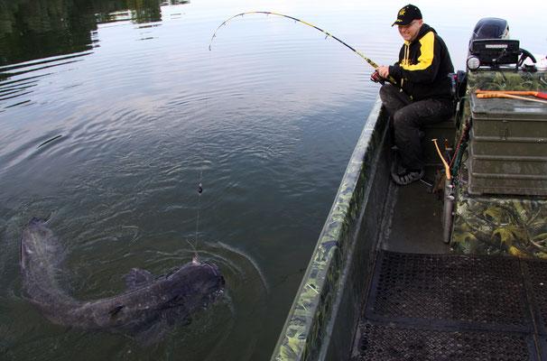 Erfolgreich angeln mit Hilfe des Wallerholzes