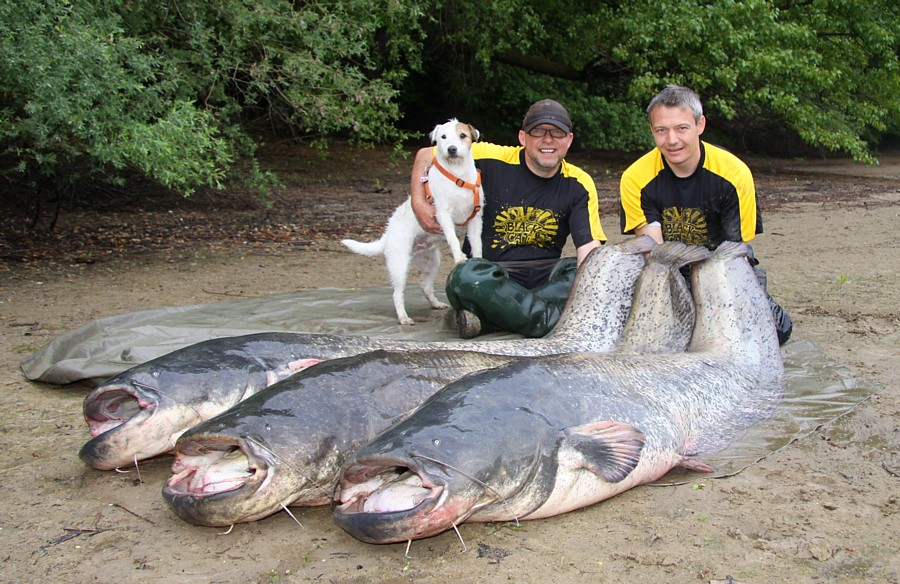 Auf dem Fangbild sind die drei größten Fische der Erlebnistour zu sehen. (221cm, 224cm, 226cm).
