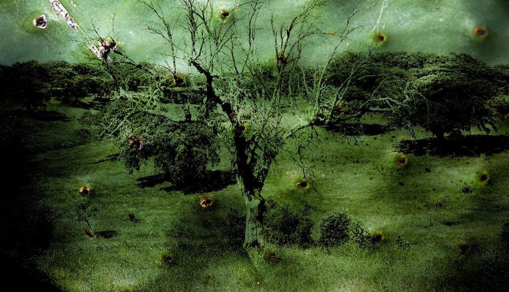 """Eternal Landscape"""