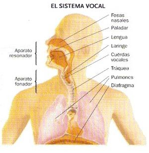 El Sistema Vocal