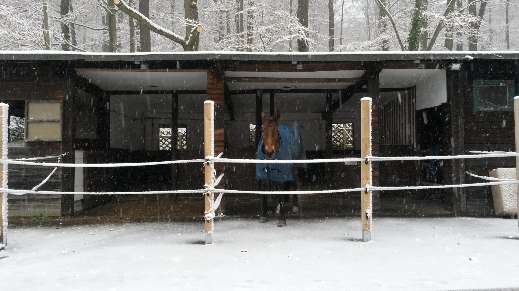neue Paddockboxen im Winter